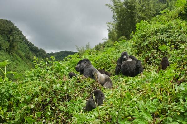 5 Days Rwanda Double Gorilla Trekking Safari